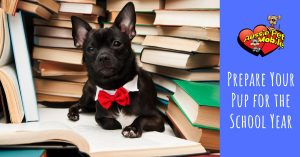 Prepare Your Pup For The School Year