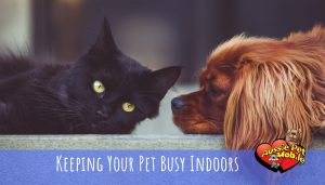 Keeping Your Pet Busy Indoors